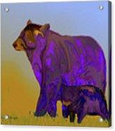 Digital Black Bear Sow And Cub Acrylic Print