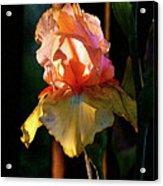 Digital Painting Iris Catching The Sun 6768 Dp_2 Acrylic Print