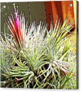 Digital Plant Acrylic Print