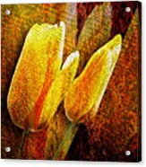 Digital Tulips Acrylic Print