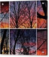 Digital Winter Trees Acrylic Print