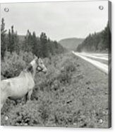 Dilemma On Highway #1, Chickaloon, Alaska Acrylic Print