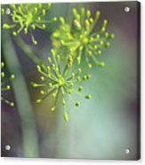 Dill Abstract On Mint Green And Plum Acrylic Print