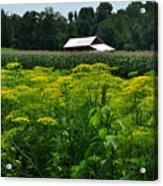 Dill Field Hudson Valley Ny Acrylic Print