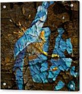 Diminishing Poppy Acrylic Print