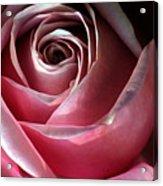 Dimming Rose Acrylic Print