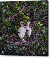 Ding Darling Wildlife Refuge I Acrylic Print
