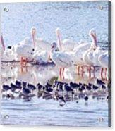 Ding Darling Wildlife Refuge V Acrylic Print