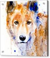 Dingo Acrylic Print