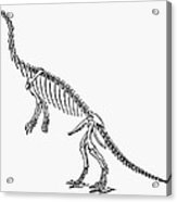 Dinosaur: Anchisaurus Acrylic Print