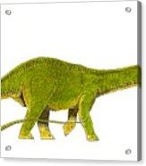 Diplodocus Acrylic Print