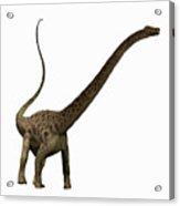 Diplodocus Profile Acrylic Print