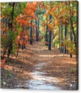 Autumn Scene Dirt Road Acrylic Print