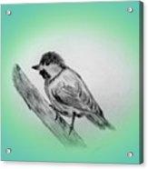 Dirty Bird Acrylic Print
