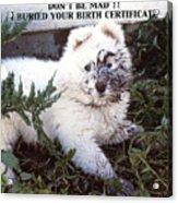 Dirty Dog Birthday Card Acrylic Print