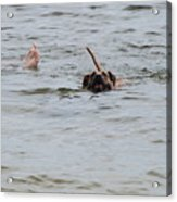 Dirty Water Dog And Feet Acrylic Print