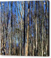 Discovery Park No.3 Acrylic Print