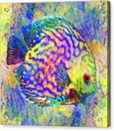Discus Fish Acrylic Print