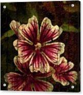 Distinctive Blossoms Acrylic Print