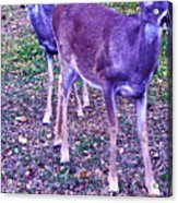 Distrubing Deer Acrylic Print