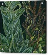 Ditchweed Fairy Mullein Acrylic Print