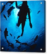 Diver And Reef Fish Acrylic Print