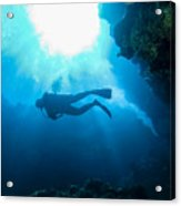 Diver At Pakin Atoll Acrylic Print