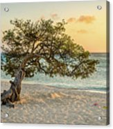 Divi Tree Sunset Acrylic Print