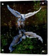 Divine Longing Acrylic Print