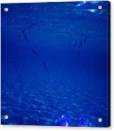 Diving ... Acrylic Print