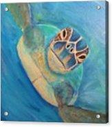 Diving Sea Turtle Acrylic Print