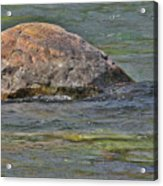 Diving Turtle Rock - Flathead River Middle Fork Mt Acrylic Print by Christine Till