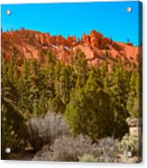 Dixie National Forest Acrylic Print