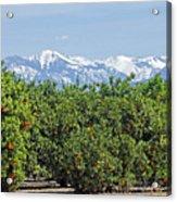 Dm6850-e Orange Grove And The Sierra Nevada Ca Acrylic Print