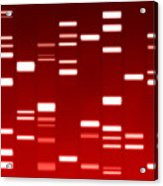Dna Red Acrylic Print