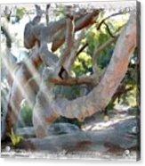 Do-00044 Mount Ettalong Acrylic Print