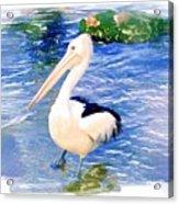 Do-00088 Pelican Acrylic Print