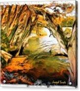 Do-00268 Trees On Water In Avoca Estuary Acrylic Print