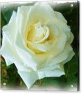 Do-00300 La Rose De Aaraya Acrylic Print