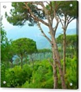 Do-00301 Pine Trees Forest In Aaraya Acrylic Print