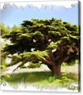 Do-00319 Cedar Tree Acrylic Print