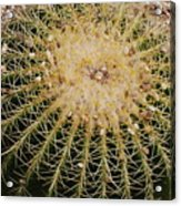 Do Not Touch Acrylic Print