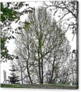 Do You See The Walking Tree Acrylic Print