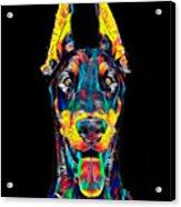 Doberman Dog Breed Head Pet Breed True Friend Color Designed Acrylic Print