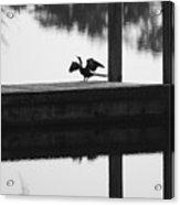 Dock Bird Pre Flight Acrylic Print