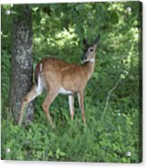 Doe In The Forest Acrylic Print