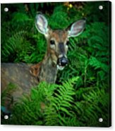 Doe In The Woods Acrylic Print