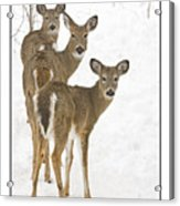Doe-ray-meh Acrylic Print