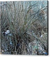 Does Nature Expressionistically Abstract Itself Acrylic Print