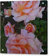 Does Roses Has Thorns Or Does Thorns Has Roses Acrylic Print
